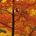 iron bed-fall_leaves_003